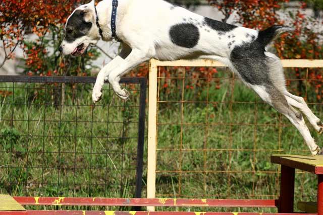 фото собак, собак фотографировать, фотограф собак ...: http://aziatclub.narod.ru/Fotograf.html